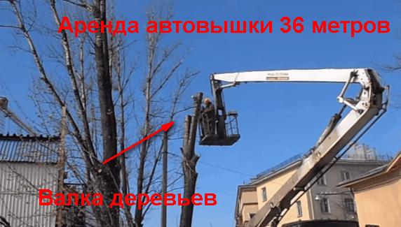 Валка деревьев автовышкой 36 метров